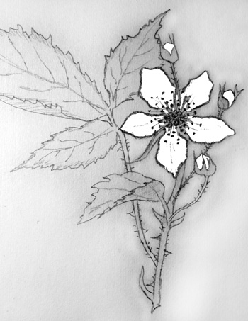 How To Draw Simple Flowers - Pencil Drawing Lessons by Carol Rosinski