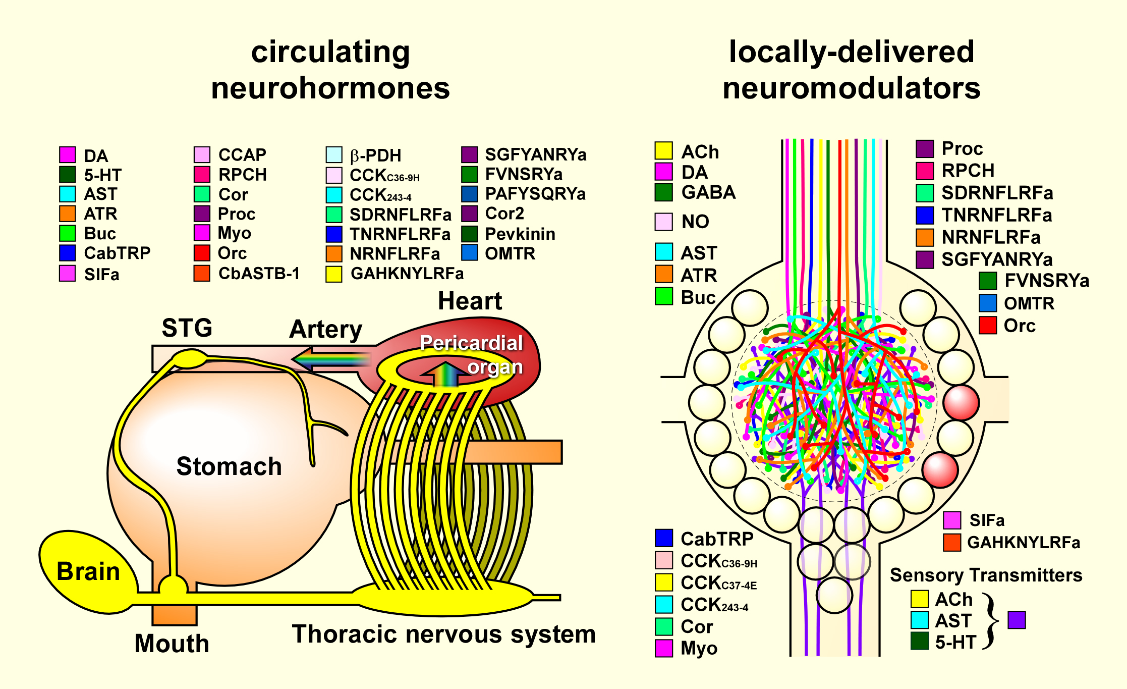 Figure Central Wiring Diagram Further Home Circuit On Generator Modulators In Cancer