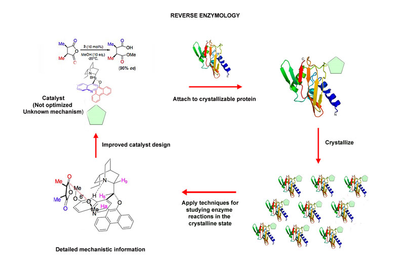 enzymology research papers Jsm enzymology and metabolism is an international, open access, peer reviewed journal that brings about latest research in all related aspects of enzymology.